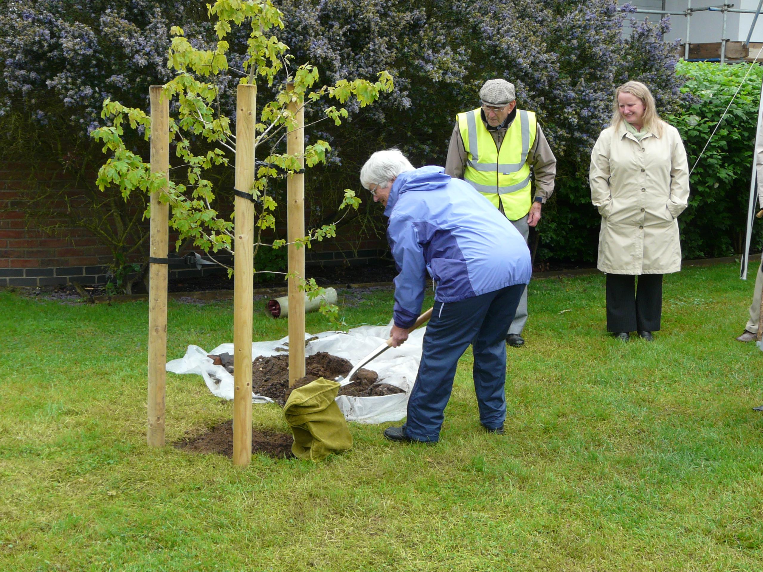 Diamond Jubilee Field Maple Tree Planting